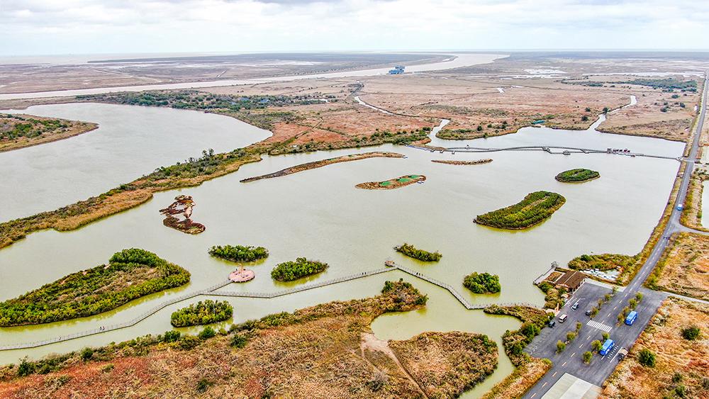 黄河口湿地 (1).jpg