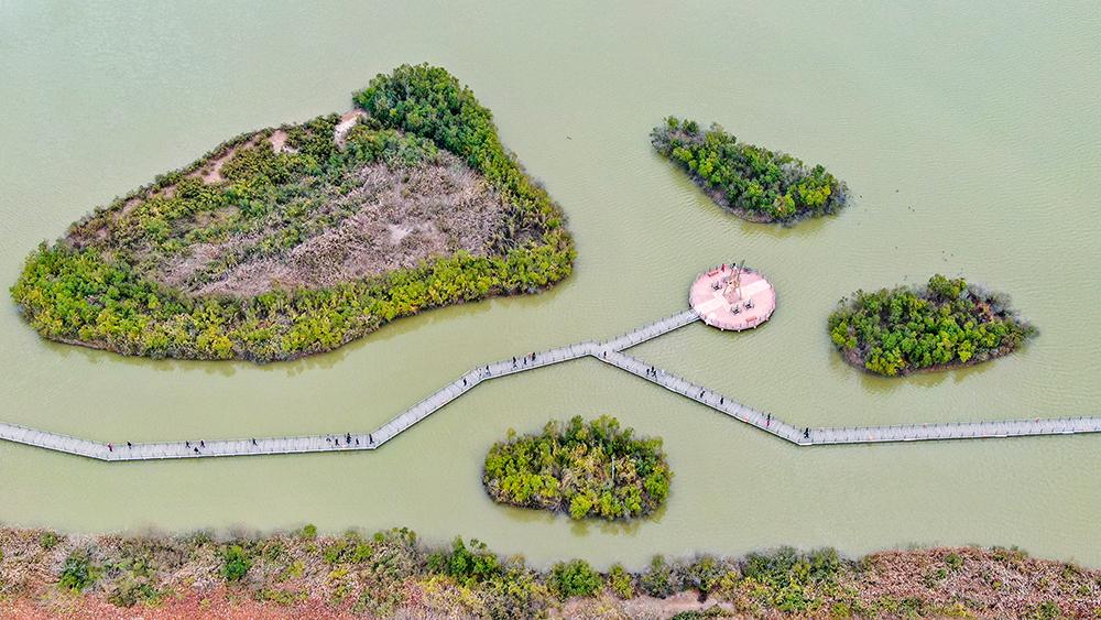 黄河口生态湿地万物生长、群鸟翔集 (1).jpg